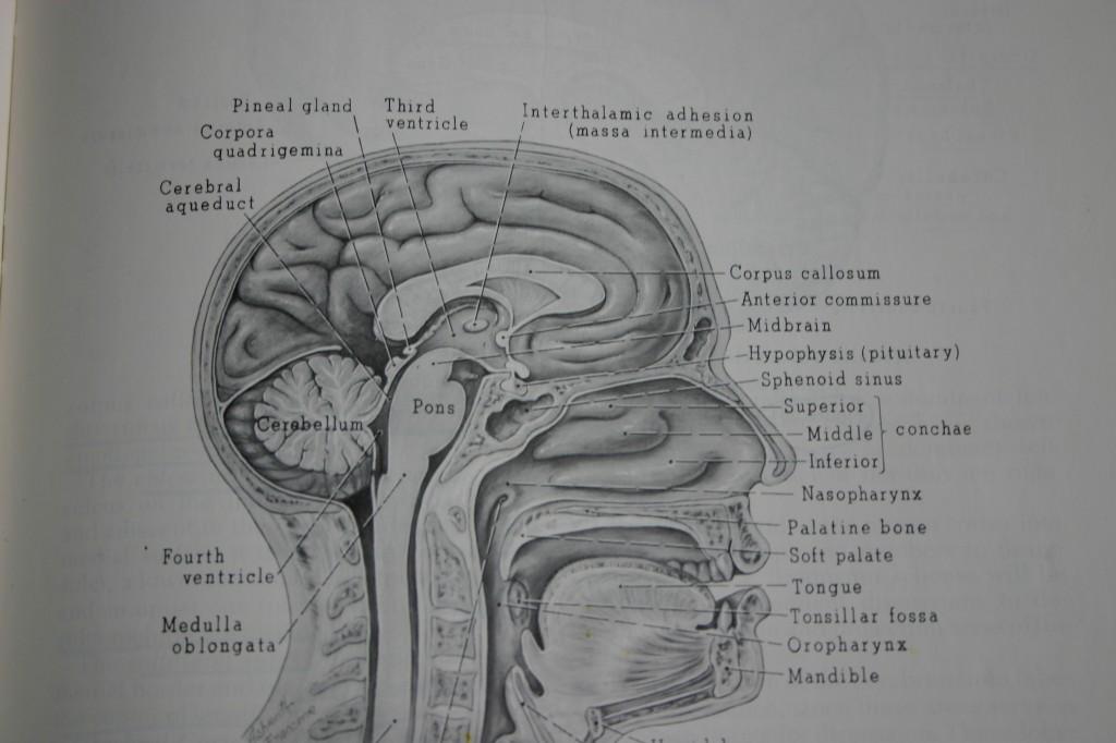 Battling With My Brain