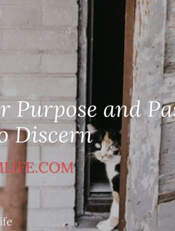 purpose and passion discernment