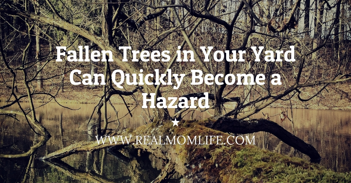 Fallen Trees in Your Yard Can Quickly Become a Hazard
