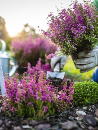 What You Need To Know Before Starting Your Own Garden